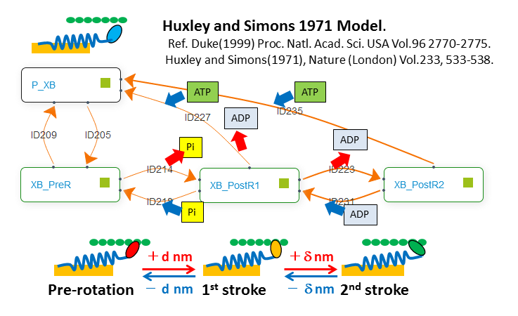 Huxley and Simons 1971 model